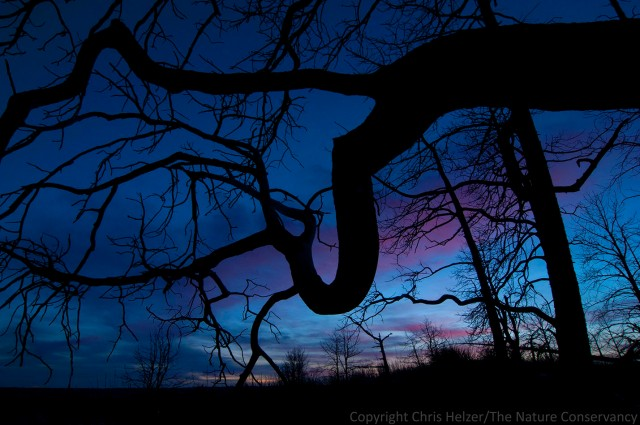 Tree skeletons in post sunset glow in the 2012 wildfire area at TNC's Niobrara Valley Preserve, Nebraska.
