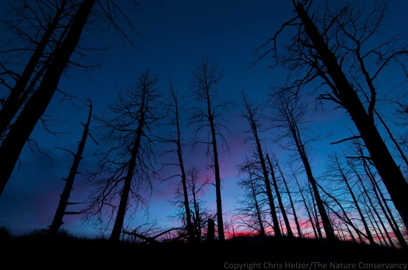 Tree skeletons in post sunset glow in the 2012 wildfire area at TNC's Niobrara Valley Preserve, Nebraska.