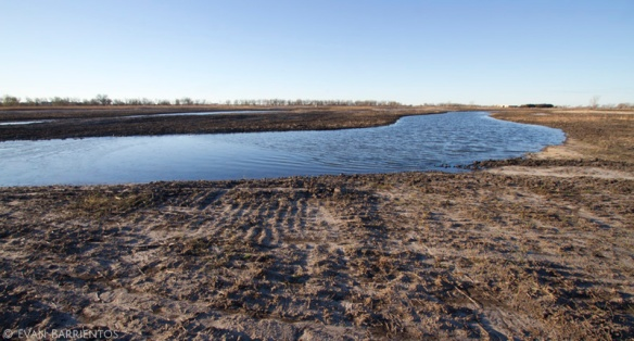 Dirt now, prairie and wetland later. This re-excavated slough and former weed field is ready to be seeded!