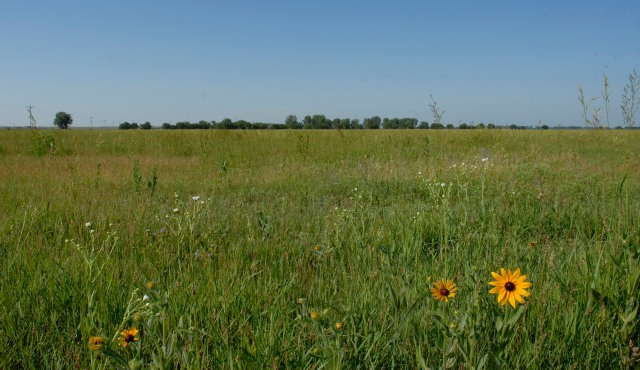 The small row of trees on the horizon may seem insignificant, but the removal of those trees would visually reconnect three chunks of prairie; potentially having pronounced effects on grassland bird nesting occurrences and brood rearing success. Photo by Eric Chien.
