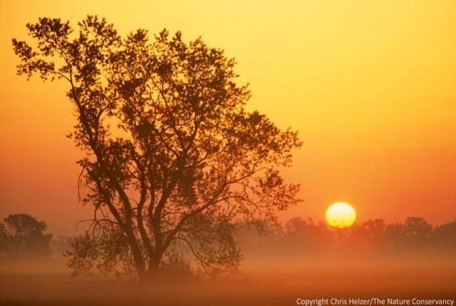 (INTERNAL RIGHTS ONLY, CREDIT IS MANDATORY) Sunrise over meadow along Central Platte River, Nebraska. Hall County, Nebraska. May 1995. TNC Caveny Tract. Cottonwood tree. Lowland tallgrass prairie. Central Mixed-Grass Ecoregion. © Chris Helzer