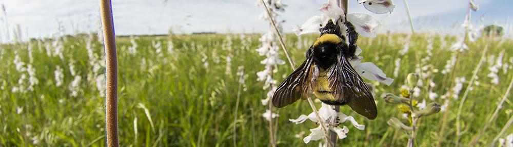 The Prairie Ecologist